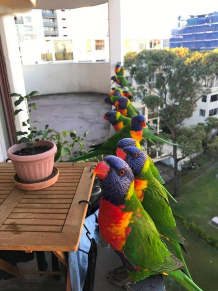 La recherche de colocation à Sydney