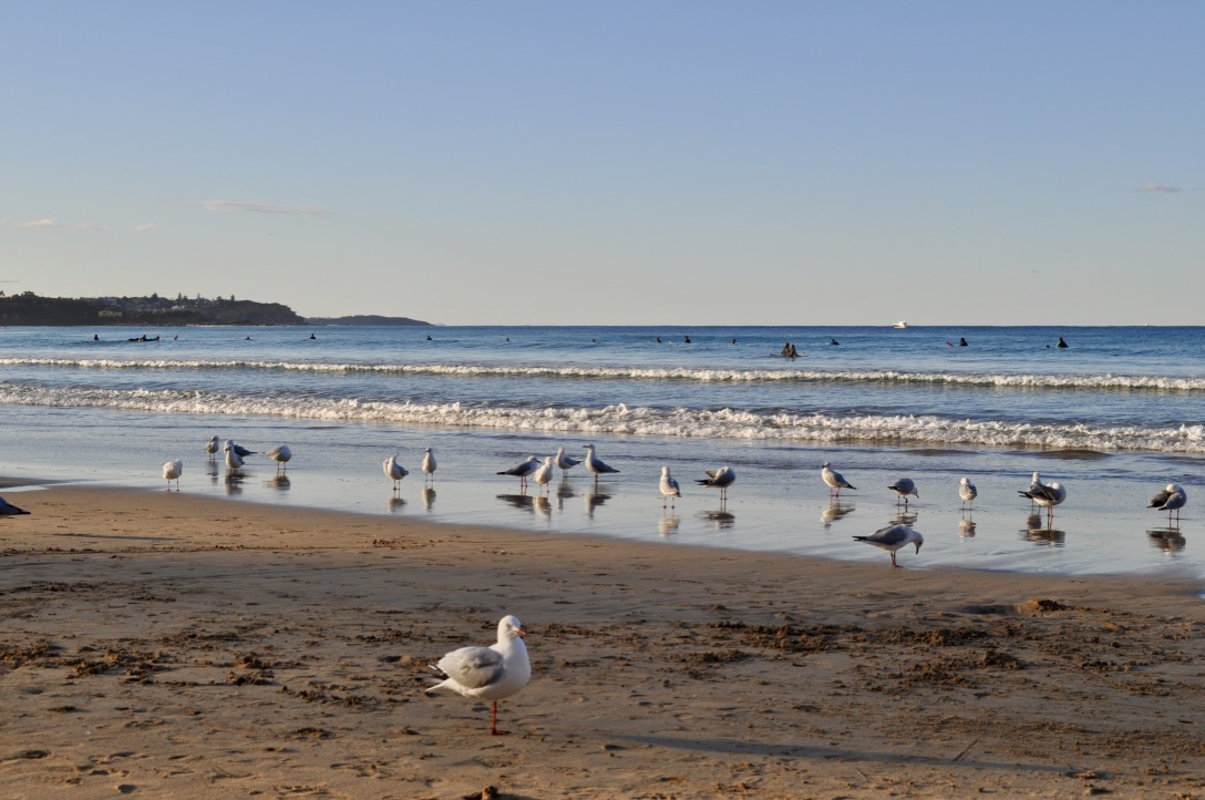Manly-Sydney