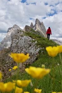 Mt Seceda Dolomites Italie