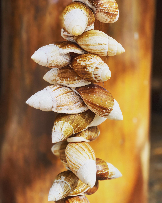 Escargots Ile des Pins