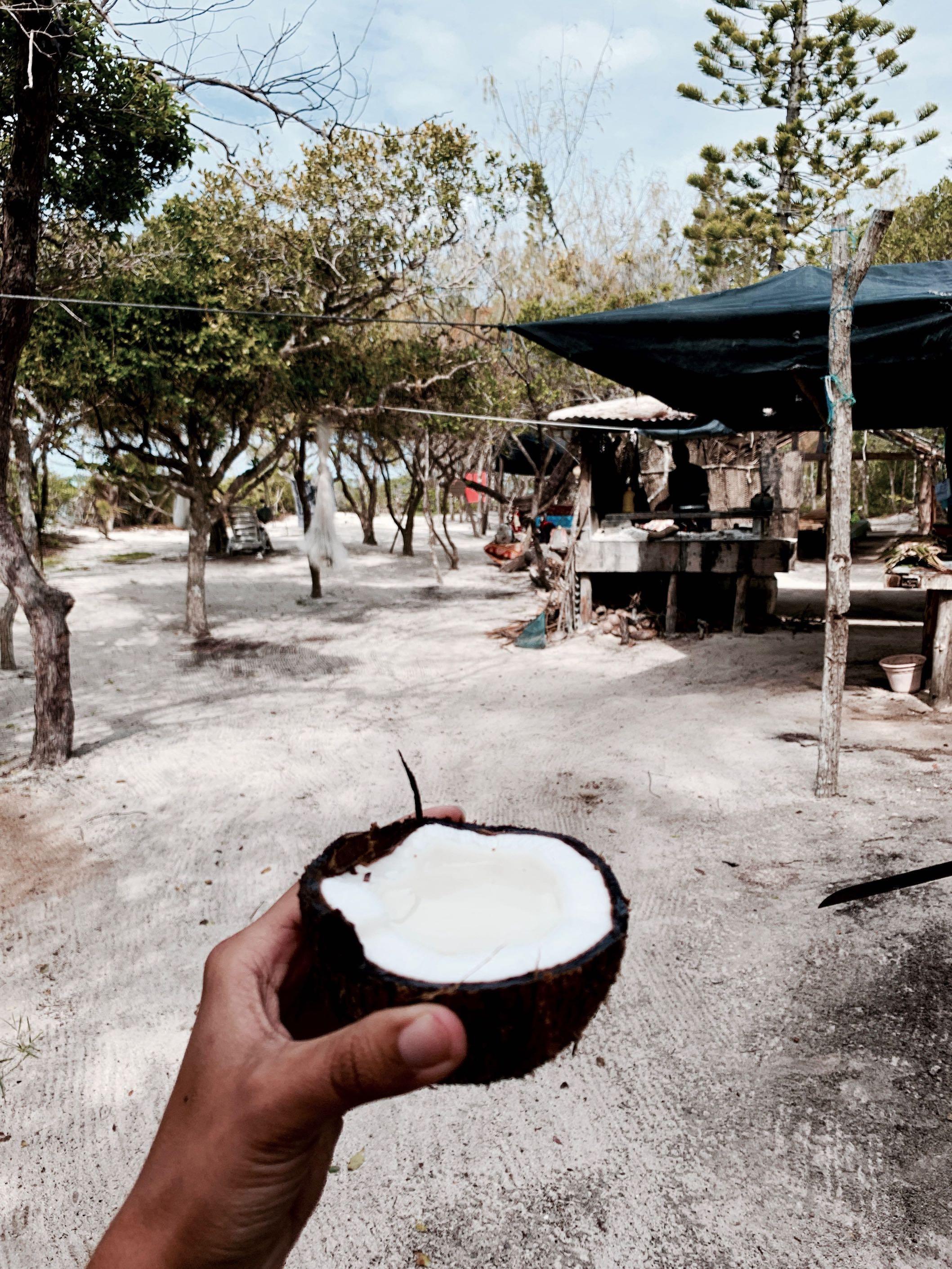 Ile Brosse Ile des Pins - Noix de coco