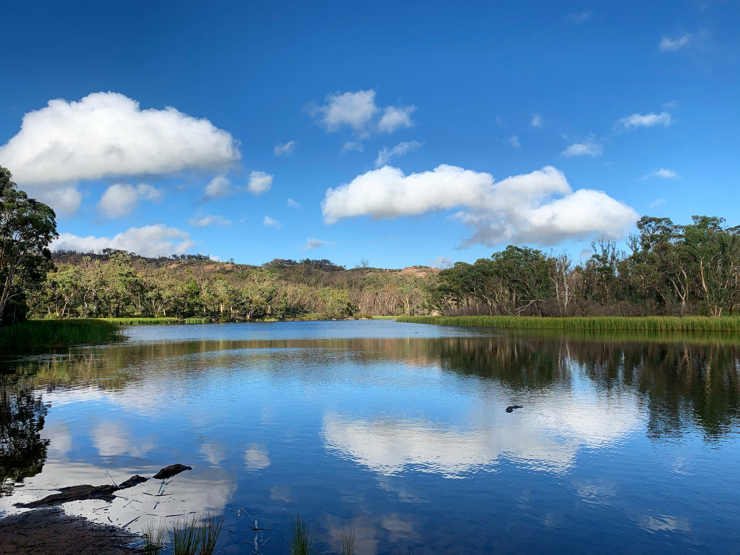 Dunns Swamp – Wollemi National Park