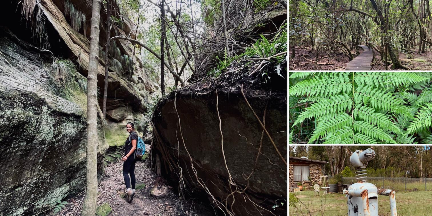 Ferntree Gully Reserve Growee NSW